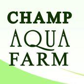 Champ Aqua Farm
