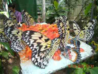 Jumalon Museum, Butterfly Sanctuary and Art Gallery