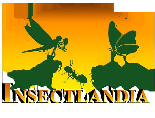 Insectlandia