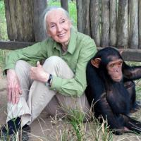 "20th Century Fox Partners with the Jane Goodall Institute to  Aid in Rehabilitation of Chimpanzees in Honor of ""War for the Planet of the Apes"""