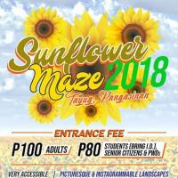 Pangasinan Reopens Famed Sunflower Maze, Ready To Make Summer More Vibrant