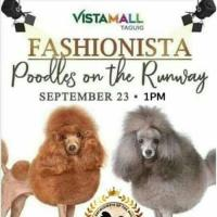 FASHIONISTA POODLES ON THE RUNWAY