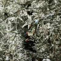 BANAS ISLA GUIMARAS (BIG) 2019 - TRAIL RUN