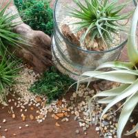 AIRPLANT STYLING 101 WORKSHOP