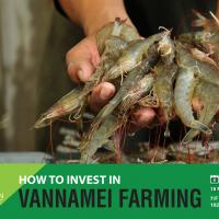 HOW TO INVEST IN VANNAMEI FARMING