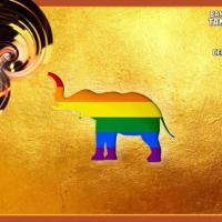 ELEPHANT DRAG DISCO [PRIDE SPECIAL] AT XX XX