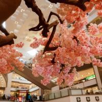 Unfold Japanese Culture at the Shang