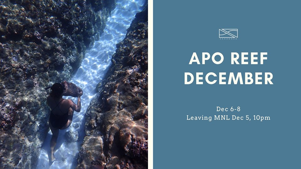 Seazoned Apo Reef Dec