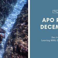 Seazoned Apo Reef Dec
