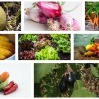 Organic Urban Farming and Gardening Seminar Set