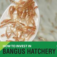 How to Invest in Bangus Hatchery