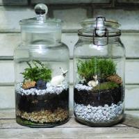 Mini Terrarium Making Workshop