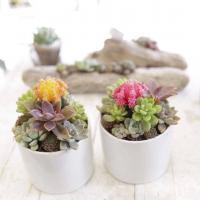 Mini Succulent Garden Workshop