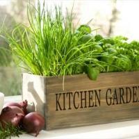 Indoor Herbs Gardening Seminar