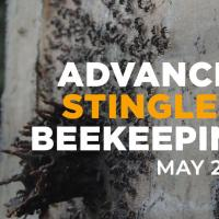 Advanced Stingless Beekeeping Workshop