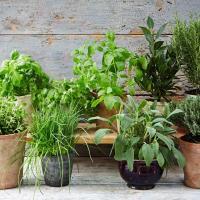 Indoor Herb Gardening Online Class