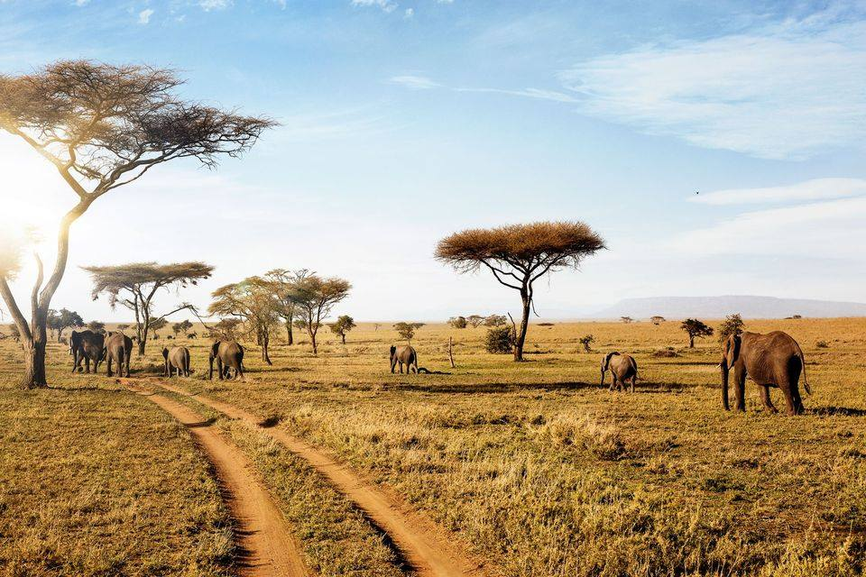Virtual Tour: African Safari